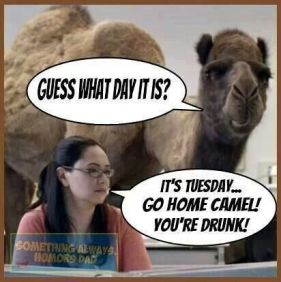 CamelWednesday