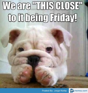 FridayPup