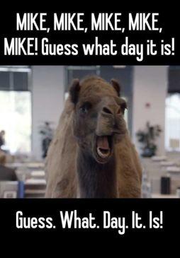 CamelWednesday2