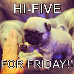 FridayPup3