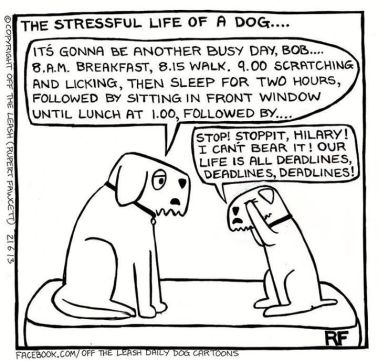 DogLifeCartoon