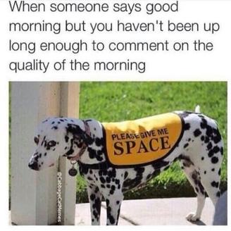 GoodMorningPup