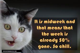 MidweekKitty
