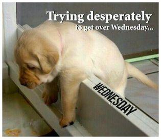 WednesdayPup