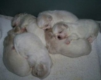 juliet'sbabies-sleeping-3 (2)