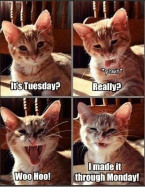 TuesdayMadeIt