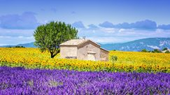 Provence10